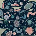 gut bacteria microbiome